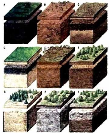 тип-грунта-под-фундамент