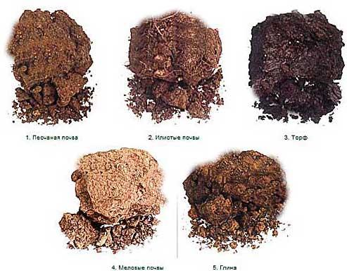 типы-почв-какие-бывают-глина-чернозем