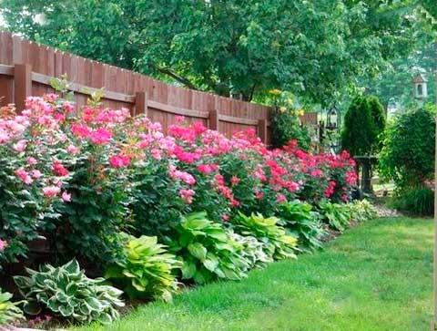 Цветы вдоль забора частного дома