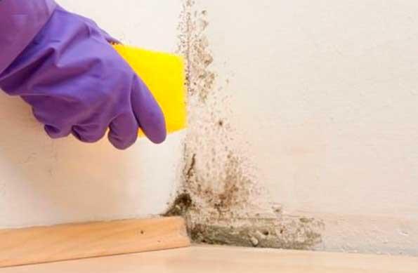 Защитить дом от грибка и плесени