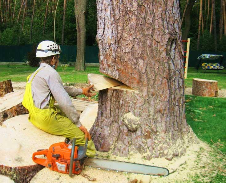 распил дерева с помощью бензопилы