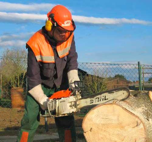распил ствола дерева бензопилой