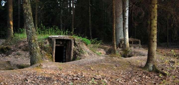 Углубленный в землю дом в сосновом лесу