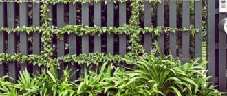 Забор с вьющимися растениями