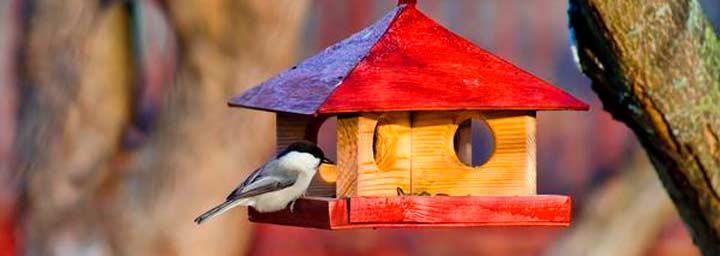 Птицы против короедов!