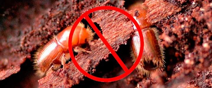 Как избавиться от жуков короедов