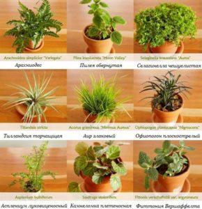 9 видов цветов во флорариум