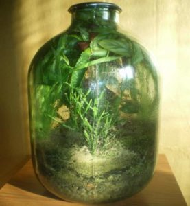 Экосистема в 3-х литровике