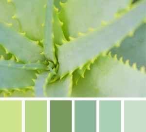 Зеленые цвета в природе