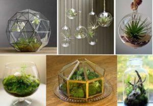 6 видов флорариума