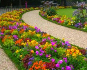 Вдоль дорожки цветы
