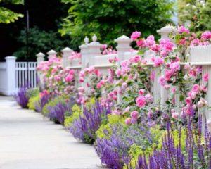 Цветовая гамма цветника