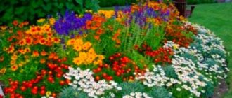 Вариант украшения сада - цветник