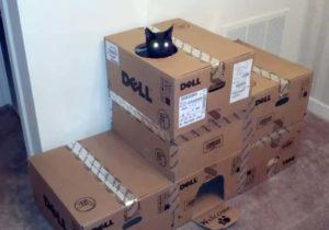 Много коробок и кот