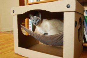 Кошка в гамаке