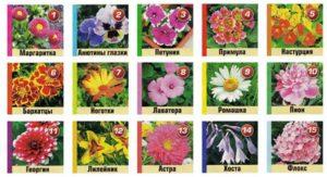 15 цветов для клумбы