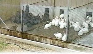Белые кролики отдельно от серых