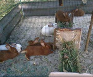 Кормушка для вольера для кроликов