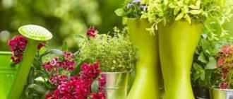 Цветы в сапожках