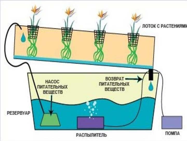 Как работает гидропоника