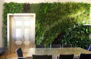 Вертикальное озеленение переговорной