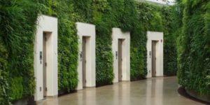 Вертикальное озеленение коридора