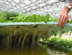 Растения в воде