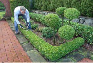 Формирование изгороди