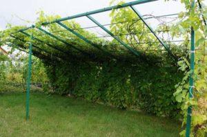 Прямоугольная беседка под виноградом