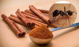 Палки корицы против муравьев