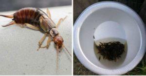 Ловля насекомых в стакан