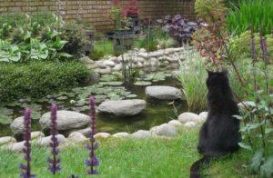 Кот смотрит на пруд