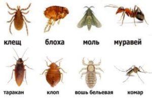 8 видов паразитов дома