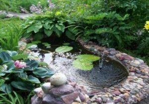 Влаголюбивые растения отлично помогут для заболоченного огорода