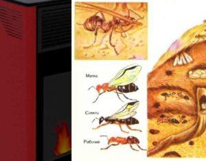 Вызывать различные заболевания у домашних питомцев и человека