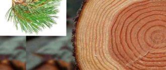 древесина устойчива к нападению насекомых