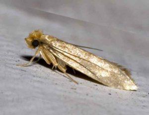Переселение взрослых особой насекомых