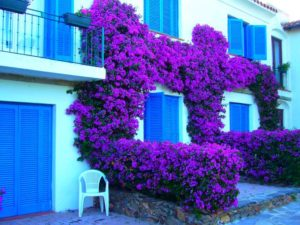 Как вырастить лианы на стенах частного дома. Какие растения для этого подойдут