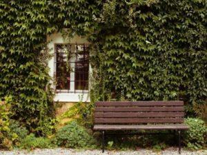 Зеленая живая стена
