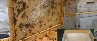 Получение комфортного микроклимата для пчел.