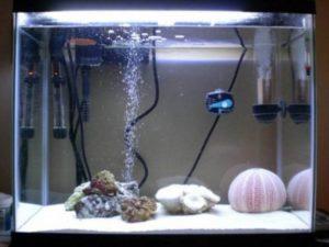 Имитация течения – определенным разновидностям рыбок требуется жить в условиях