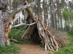 Шалаш помогает укрывать от ветра, дождя, холодов и остальных неблагоприятных природных появлений