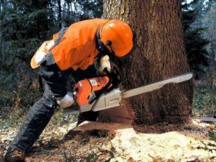 Какой штраф можно получить за спиливание дерева (в лесу, на участке, в городе)