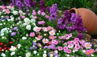 Как сделать красивый ландшафтный дизайн цветами